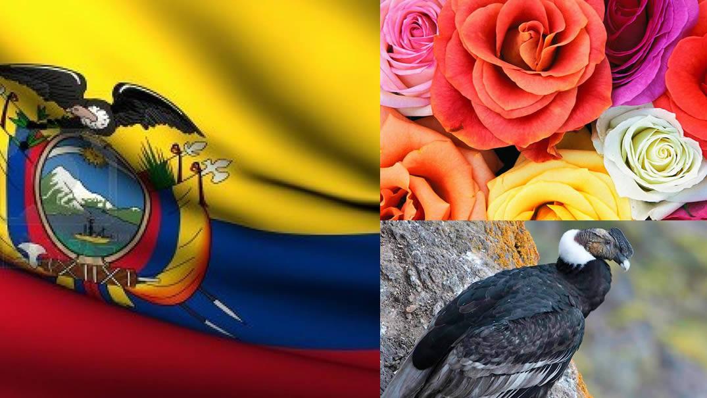 bandera-escudo-animal-flor-arbol-nacional del ecuador