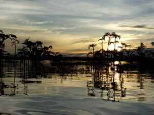 Laguna del cuyabeno